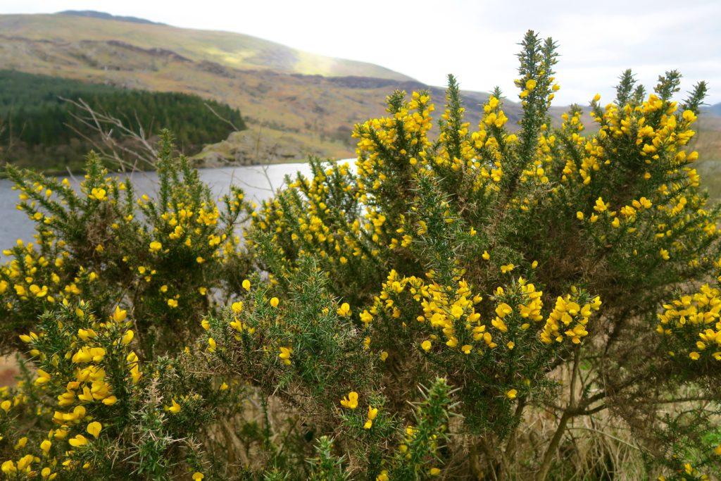 Snowdonia Lakes King Arthur