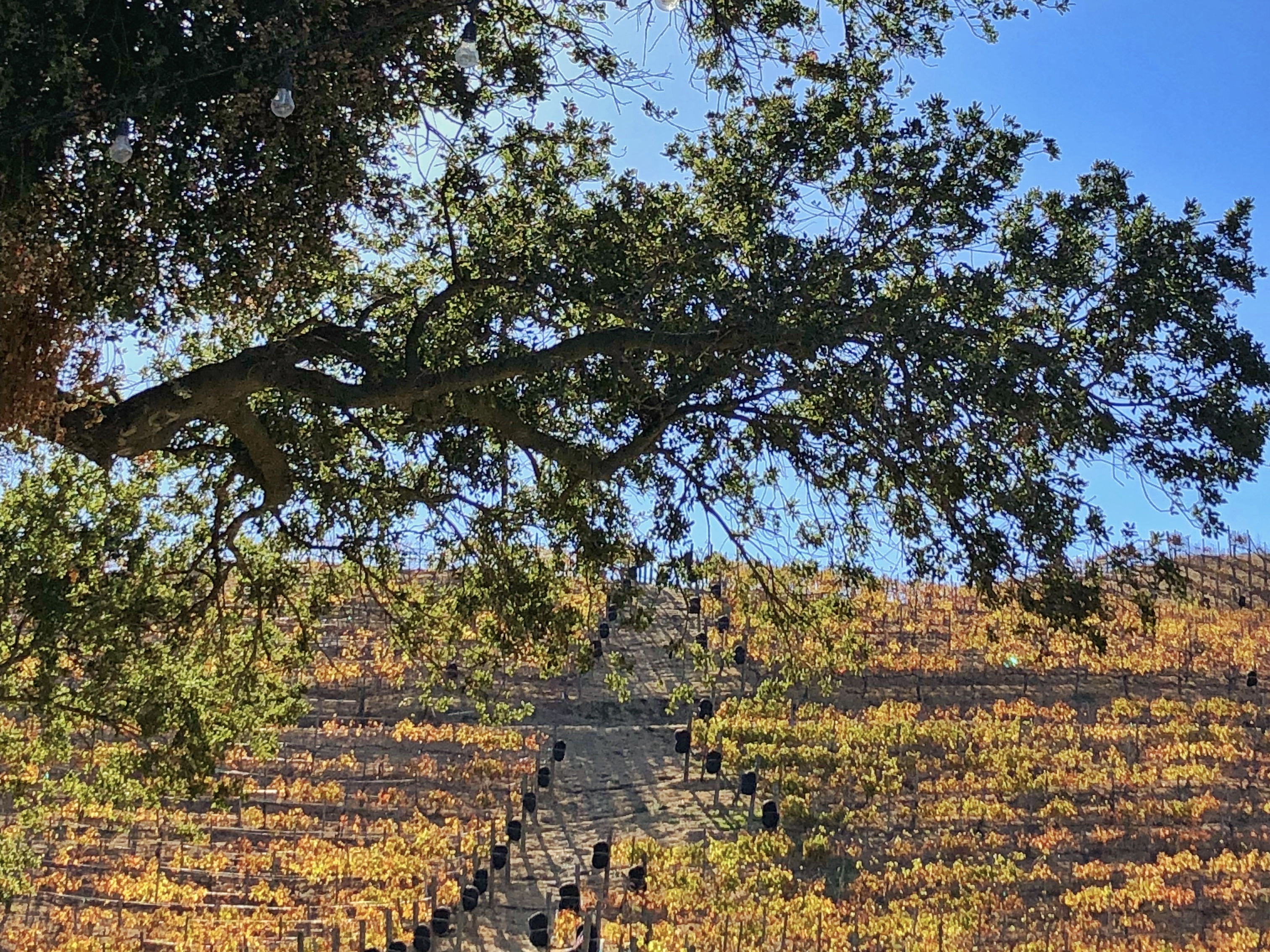 malibu wine safaris tour